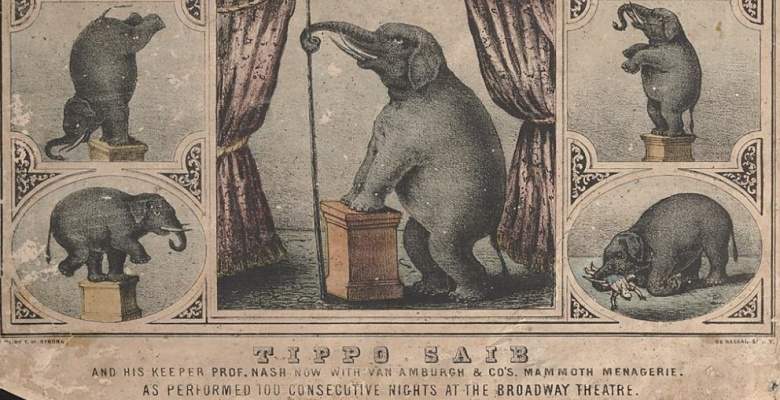 This poster (ca. 1860s) shows off some of Tippo's tricks. Courtesy of the Ringling Museum.